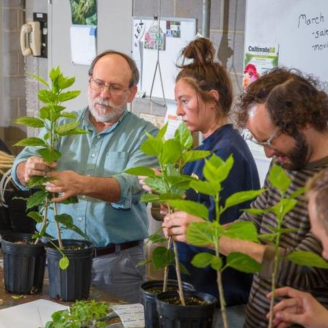UK horticulture professor Bob Geneve works with students in the greenhouse