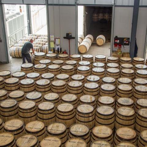rows of white oak barrels