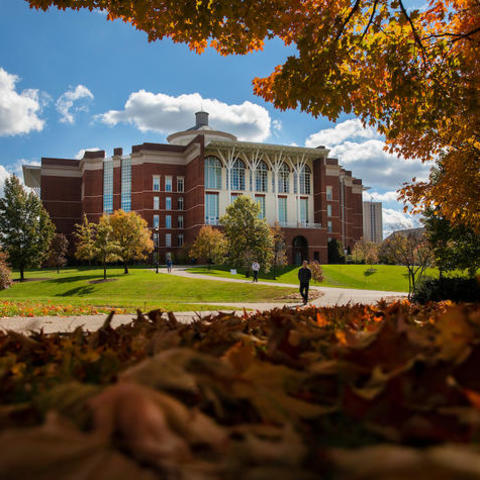photo of fall foliage outside Young Library