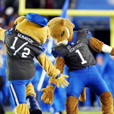 Photo of the Wildcat and Scratch