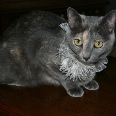 Annabel the Cat