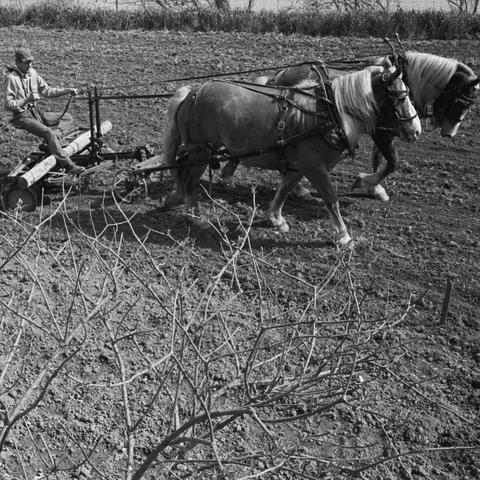 """photo of farm work """"Look and See"""" documentary"""