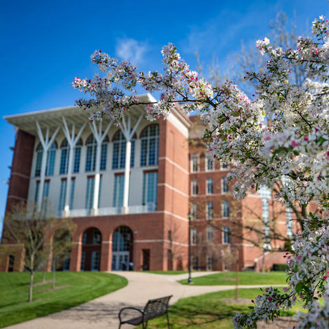 photo of W.T. Young Library with spring blooms in the foreground. Empty campus.