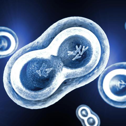 illustration of XY chromosomes