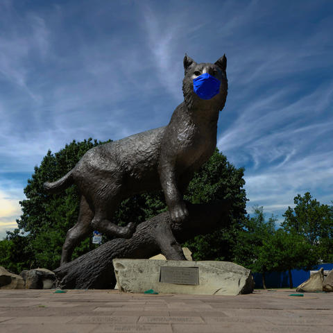 photo of Bowman the Wildcat at Wildcat Alumni Plaza wearing a mask during covid pandemic