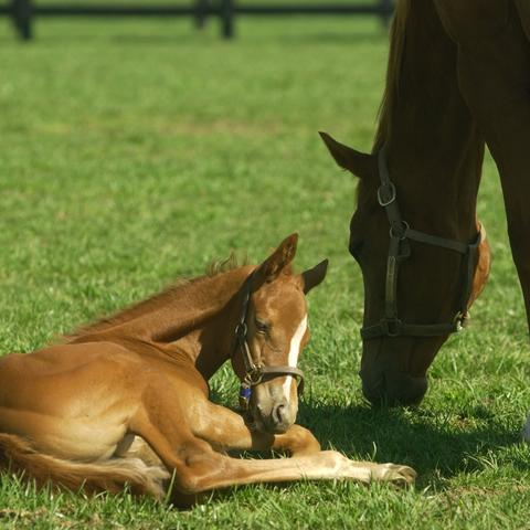 A foal and mare on grass