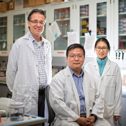 UK researchers (from left) Matthew Gentry, Haining Zhu and Lisha Kuang co-authored a study that shows a class of antibiotics could be a promising therapy for frontotemporal dementia. Mark Cornelison | UK Photo.