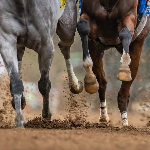 Horse racing on a track