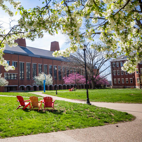 photo of trees flowering in spring on campus