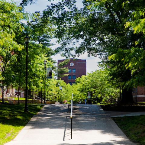photo of campus trees