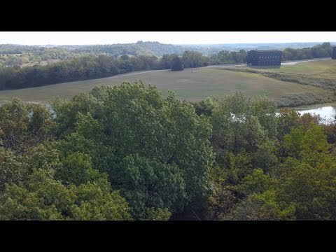 Thumbnail of video for UK Partners With Bourbon Industry Leaders to Map White Oak Genome